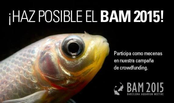 crowdfunding-haz-posible-el-bam